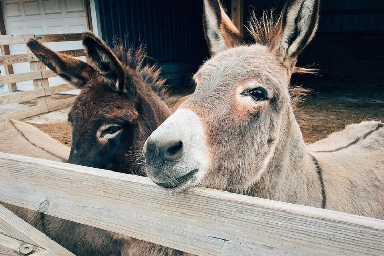 Care for Donkey