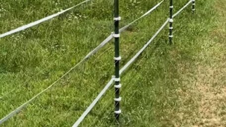 Electric Sheep Fence